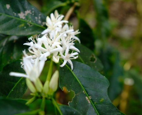 kaffee-cafecomam-bosque (13)
