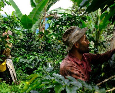 kaffee-cafecomam-bosque (2)
